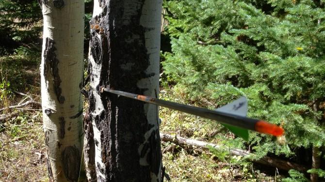 Arrow in Tree