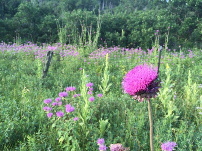 Purple Mountain Majesty - Spruce Mountain Trail - 7-25-15 - 5